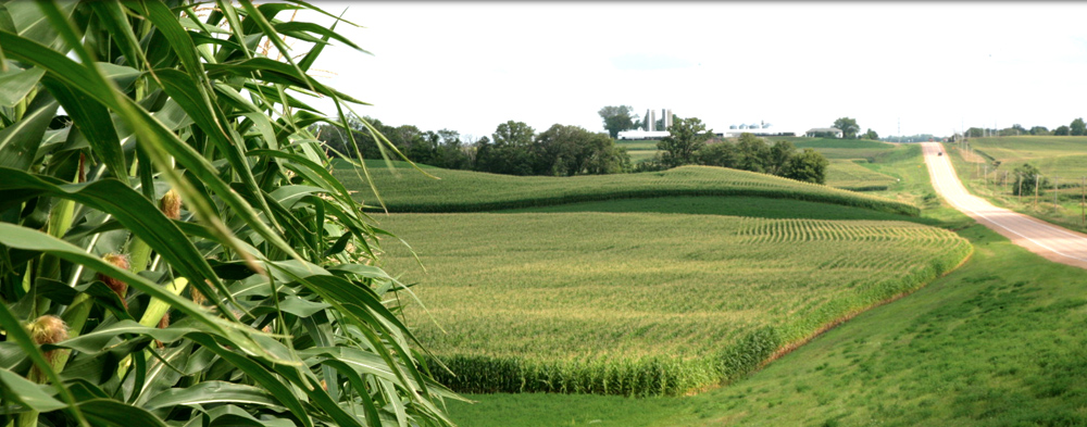 Field Corn and Rural Landscape